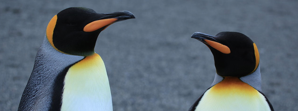 attenzione a google penguin
